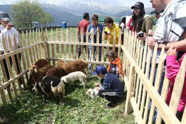 Festival of Sheep Shearing in Tatev