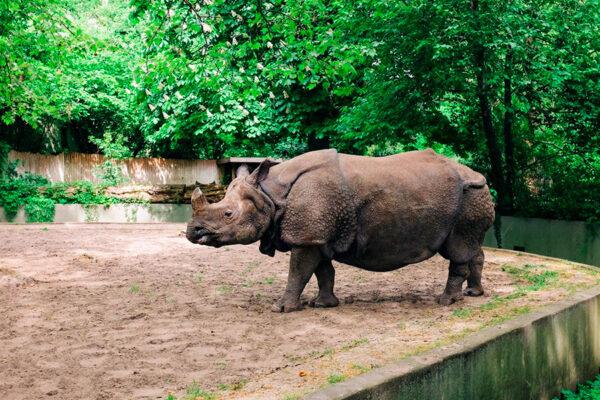 Yerevan Zoo, Armenia